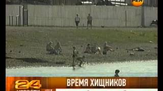 видео Акулы атакуют купальщиков в Приморье