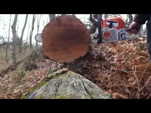 The chainsaw guy shop talk Stihl MS 362 chainsaw test M