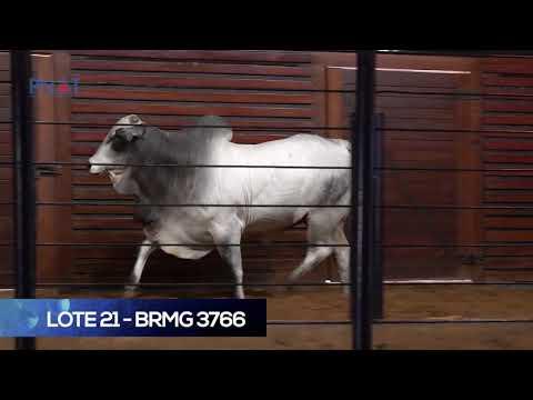 LOTE 21 - BRMG3766 - NELORE