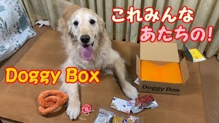 ドギーボックスさん ↓ https://doggybox.jp/ https://www.instagram.com...
