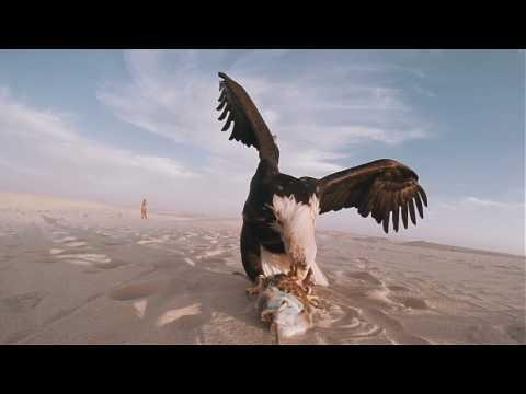 Jack Harris - Vanished Birds (New Video)