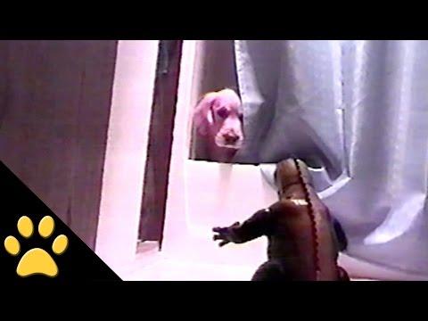 Dog Scared By Godzilla