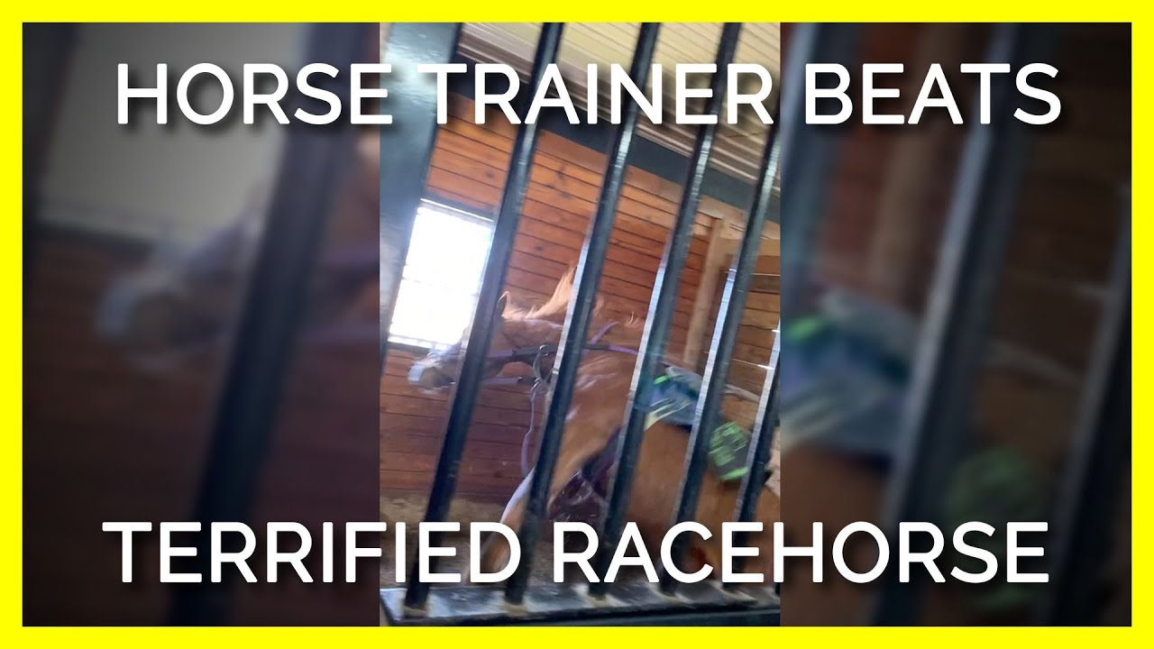 EXPOSED: Horse Trainer Screams at, Terrifies and Beats Young Racehorse