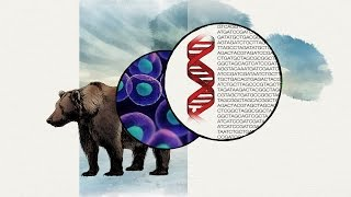 DNA Spells Evolution
