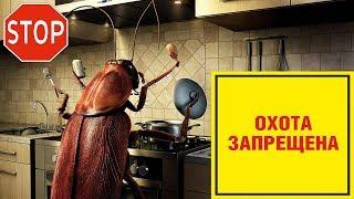 Тараканы очень важны, как показали исследования