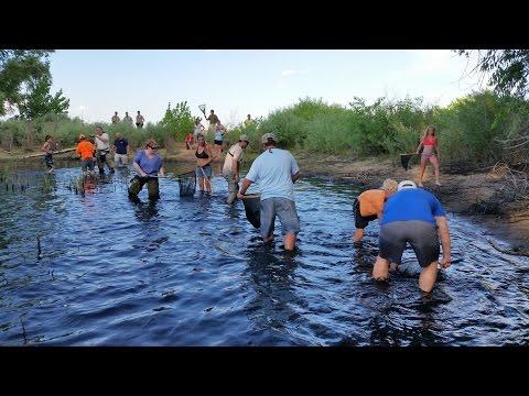 Chatfield Carp Rescue 2014