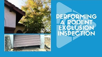 Rodent Exclusion Inspection (Episode 13)