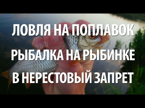 морская рыбалка запрет