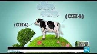 Fermes géantes : la bataille du bétail #ElementTerre - AGRICULTURE