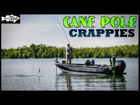Target Spring Crappies With Long Rods And Plastics