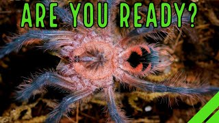 Your First Tarantula/What To Expect When You're Expecting a Spiderling