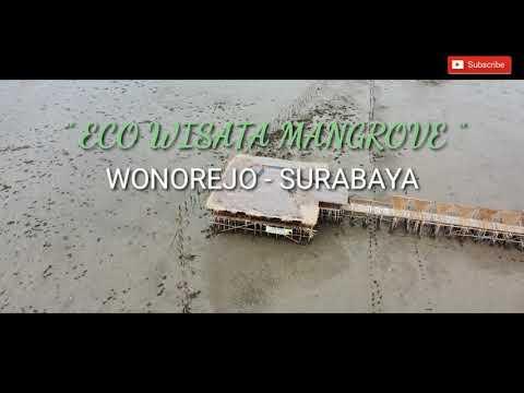 ekowisata-hutan-mangrove-surabaya-|-wonorejo---surabaya