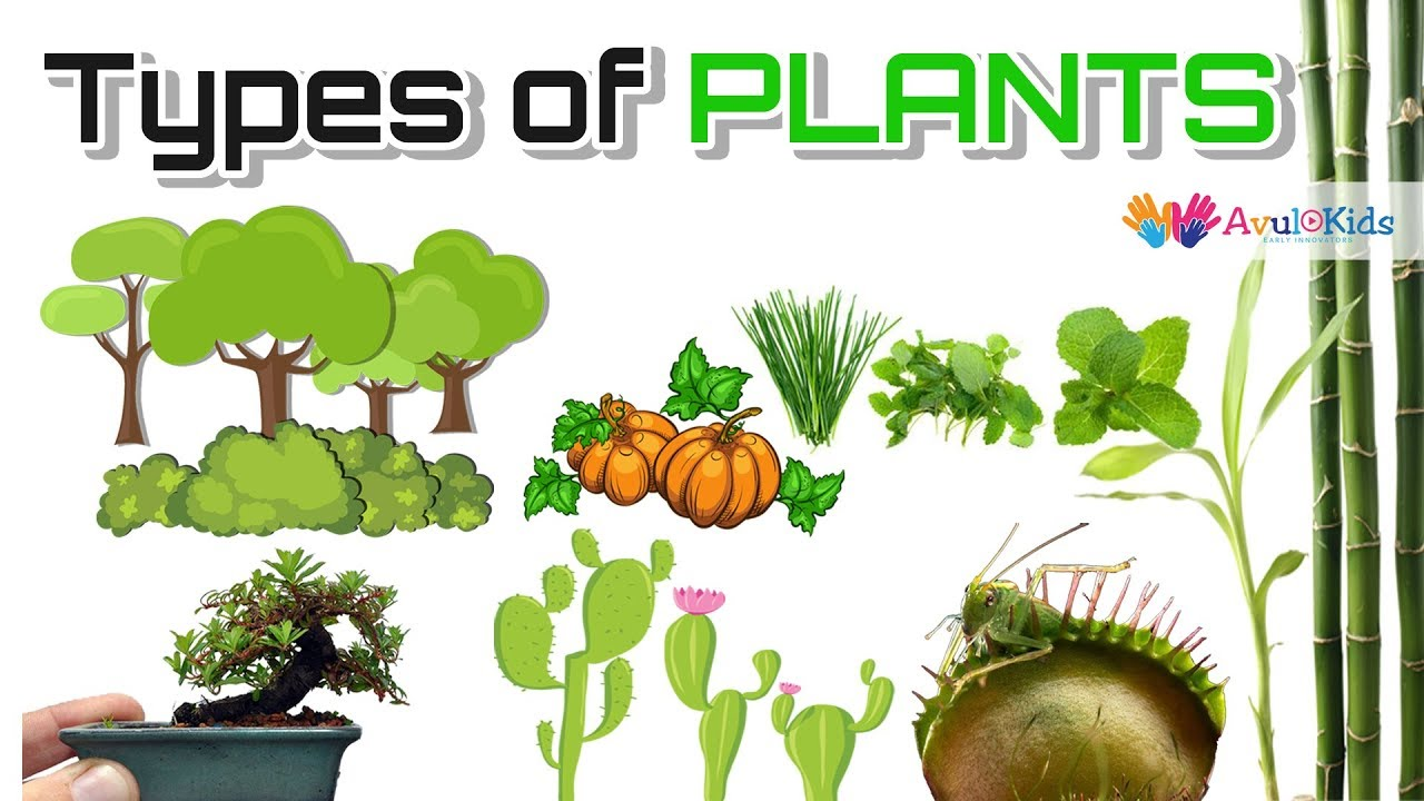 Types of plants | Science for kids |Trees,Herbs,Climbers ...
