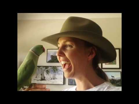 funny video | trained parrot | amazing video