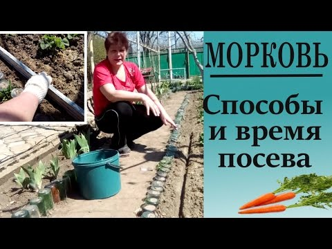Как сажать шпинат семенами – только проверенные способы