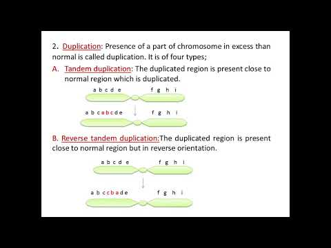 Structural changes in chromosomes Mp3