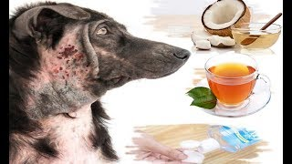 10 Best Home Remedies for Hot Spots in Dogs (Without Vet Help)