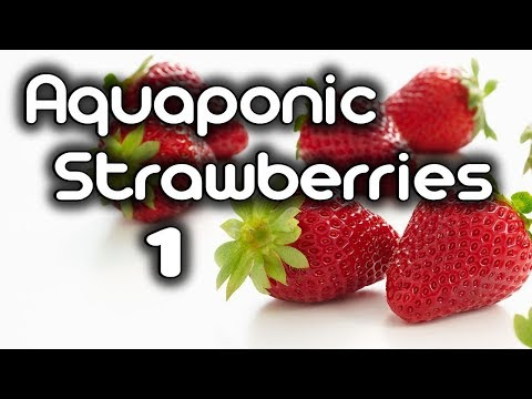 How to Grow Aquaponic Strawberries!