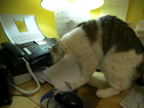 cat attacks fax machine
