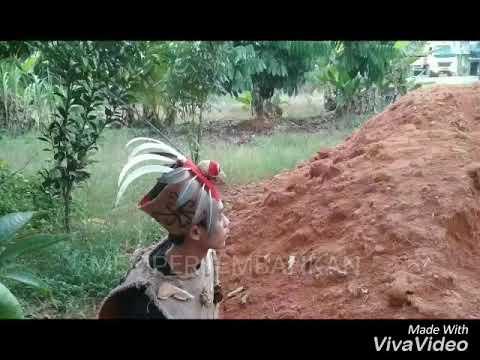 Pahauman137 Lagu dayak Urakng Kalimantan (oficial video) suras landak