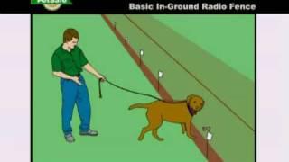 Training Your Dog To Petsafe Inground Radio Fence