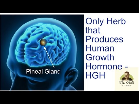 Most Beneficial Herb Known Produces HGH