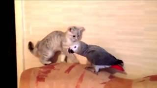 Котёнок и попугай от РУССКАЯ ПРИРОДА