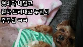 [강아지이야기] 거실서 떡실신한 강아지 깨우기