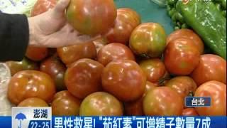 【中視新聞】茄紅素讓精子增7成 番茄葡萄柚芒果紅蘿蔔好   20140507