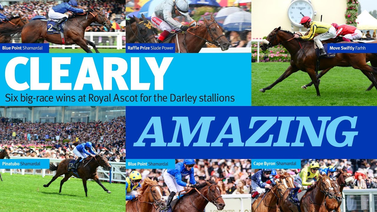 Clearly Amazing - six big-race wins at Royal Ascot for the Darley Stallions
