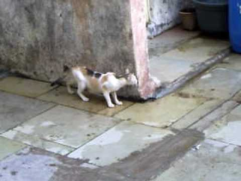 Watch full video – Smart Birds Escape from Cat – MHADA Narendranath Society, Like|Share|Subscribe