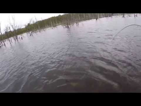 Удачная рыбалка по щуке  23 мая 2015 Сендега, Костромская область