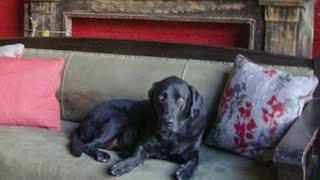 Sally the Salvage Dog passes away