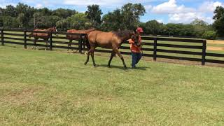 Taxi Dancer Temple City Yearling
