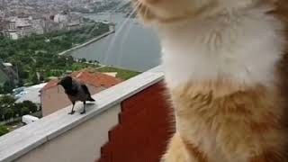 Душевный разговор кота и вороны