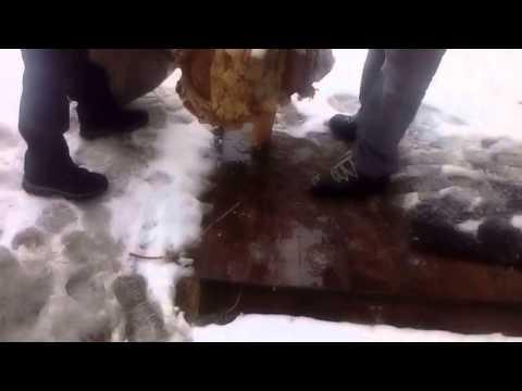 Атака на шершней зимой Достаем гнездо