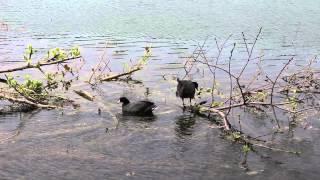 Lake Artemesia Wild life