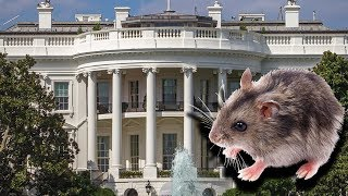 The White House INFESTED With Vermin