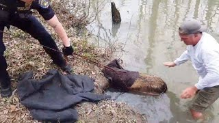 This Kind Man Tried To Rescue A Beaver, But He Got A Little Surprise Instead