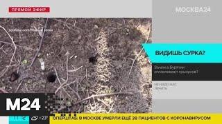 В Бурятии начали проверять грызунов на бубонную чуму - Москва 24