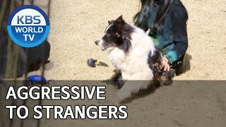Aggressive to strangers [Dogs are incredible/ENG/2020.05.20]