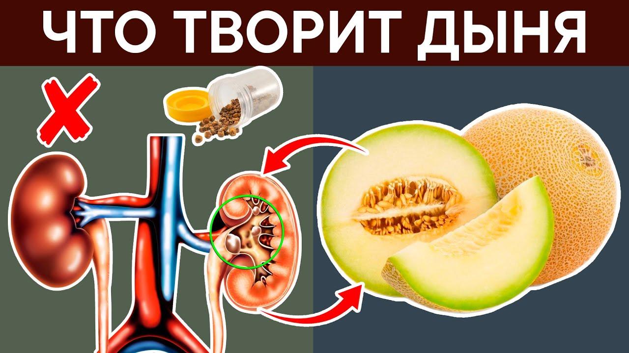 Польза и вред дыни для здоровья