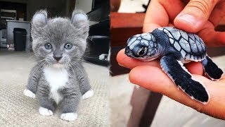 Cute Baby Animals Videos Compilation Cute Moment of The Animals   Cutest Animals #1