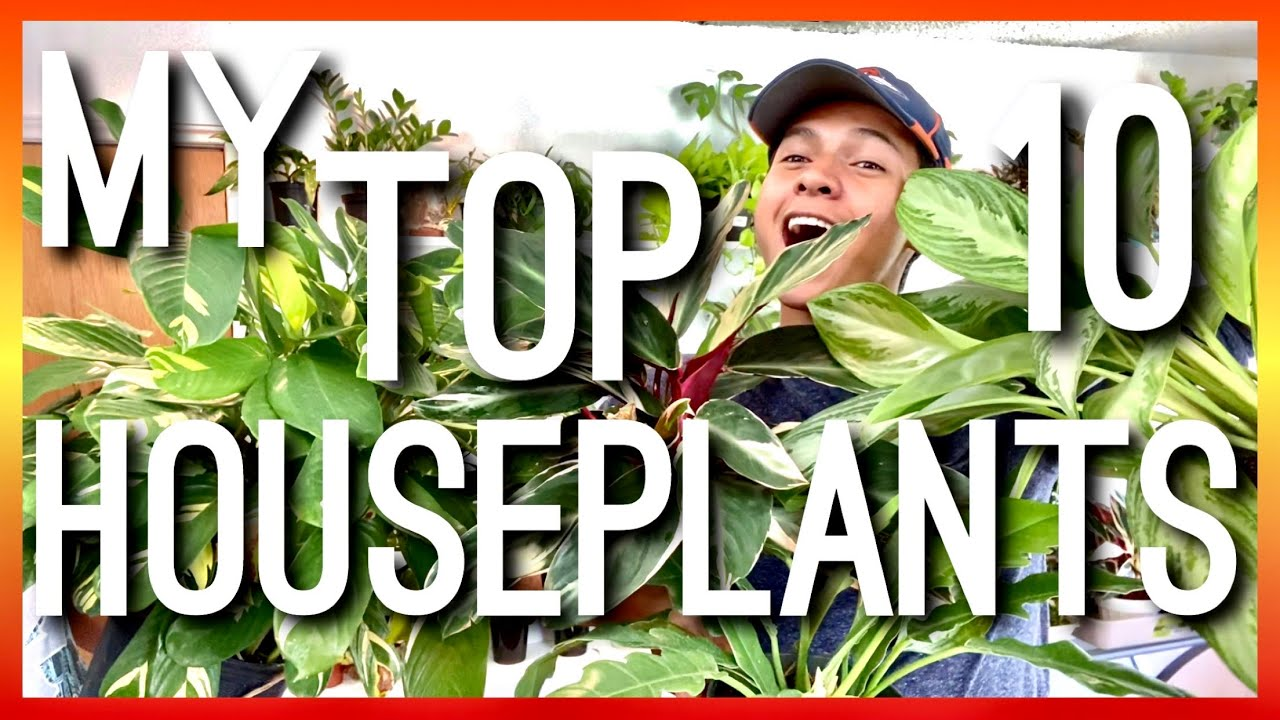 MY TOP 10 HOUSEPLANTS OF JUNE! TOP FAVORITE HOUSEPLANTS OF JUNE! TOP 10 INDOOR PLANTS! HOUSEPLANTS