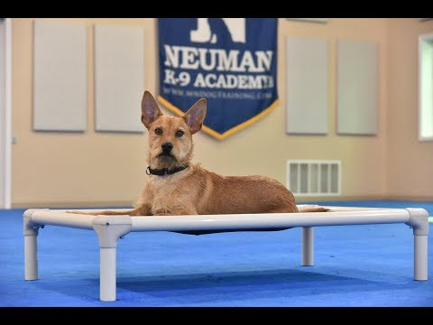 Luca (Terrier mix) Boot Camp Dog Training Video Demonstration