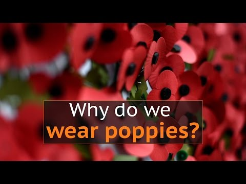 Why do people wear poppies to mark Armistice Day in the UK?