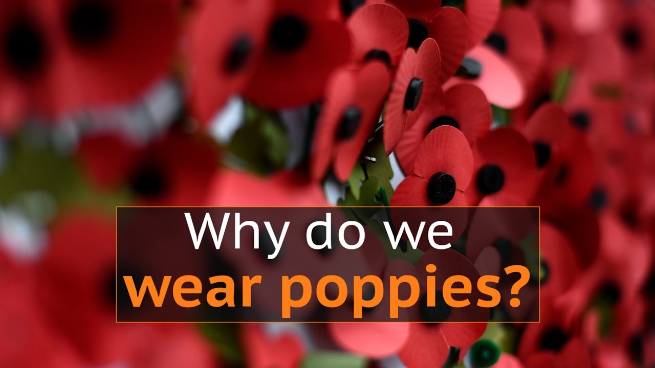 Why do people wear poppies to mark armistice day in the uk youtube mightylinksfo