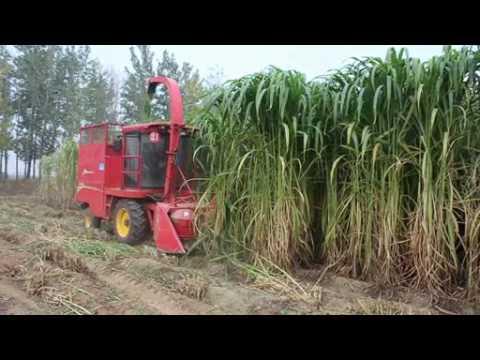 napier grass harvester corn grass cutter shredder machine video