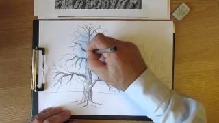 Как рисовать дуб. Часть 2. Урок 12