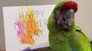Happy Mother's Day Jill Percival from DaVinci!